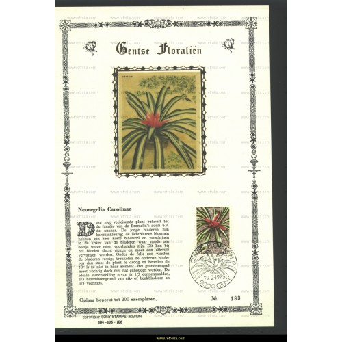 Maximum card 1975 Neoregelia Carolinae