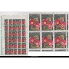 1965 Ghent Flower Show Echinocactus