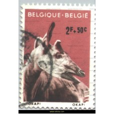 1961 Zoo Antwerp Okapi
